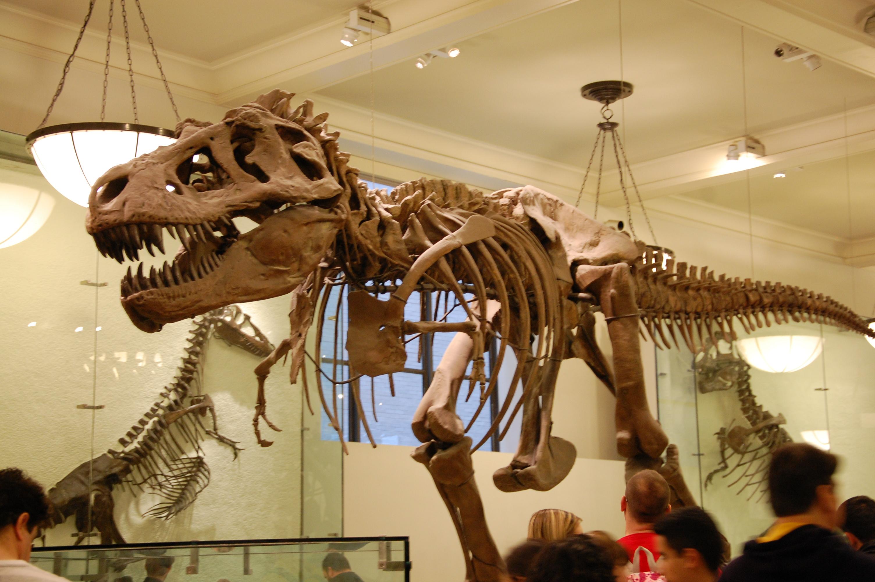 Musée de l'Histoire Naturelle - NY